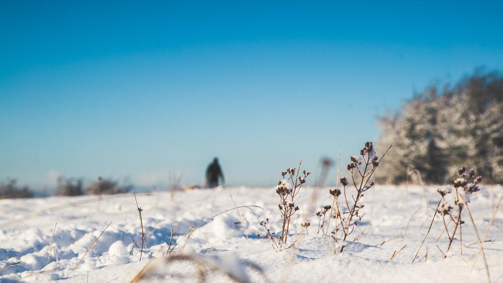 Leckhampton Hill snow-12.jpg
