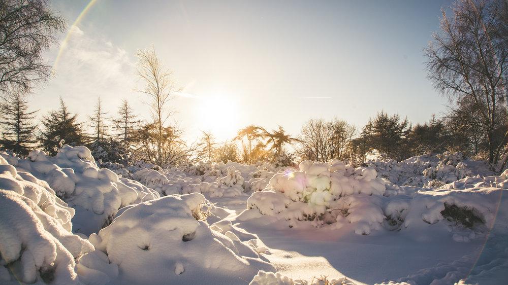 Leckhampton Hill snow-13.jpg