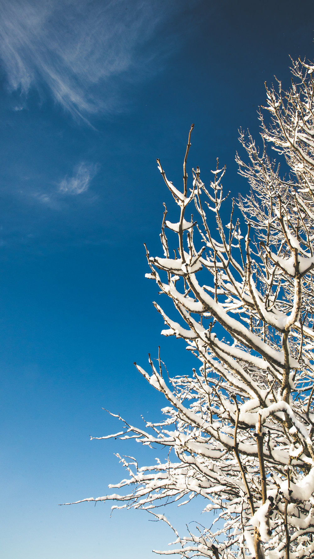 Leckhampton Hill snow-20.jpg