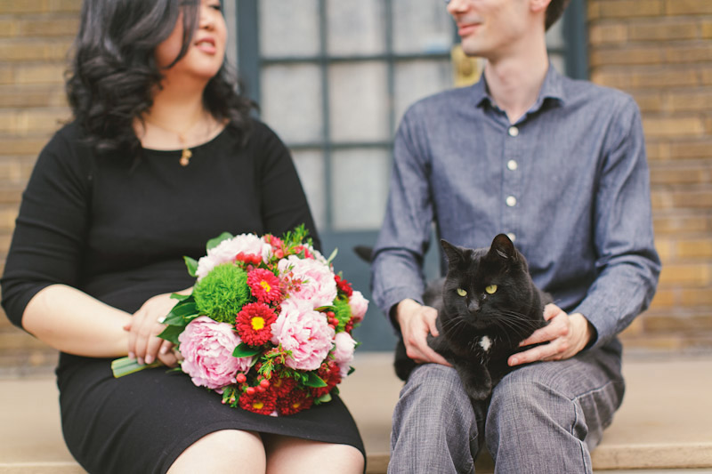 Montreal, Canada, flowers and cat