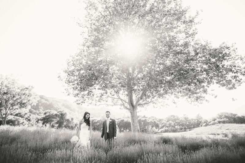 Carmel wedding, Carmel Valley Ranch, bride & groom laughing in lavender field under tree on sunny afternoon.