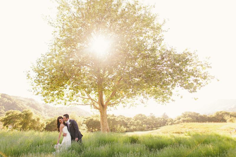 Carmel wedding, Carmel Valley Ranch, couple kissing in a field of lavender under a tree.