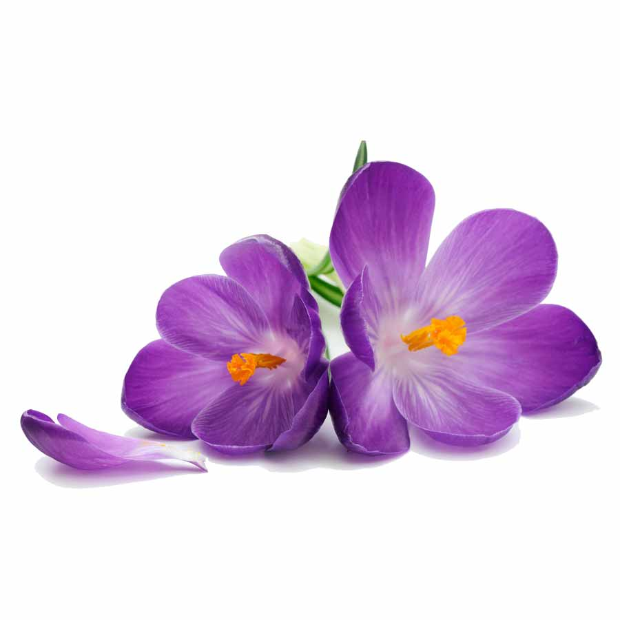 Lift contains botanical extracts found in saffron crocus, creating a beautiful floral aroma and flavor. -