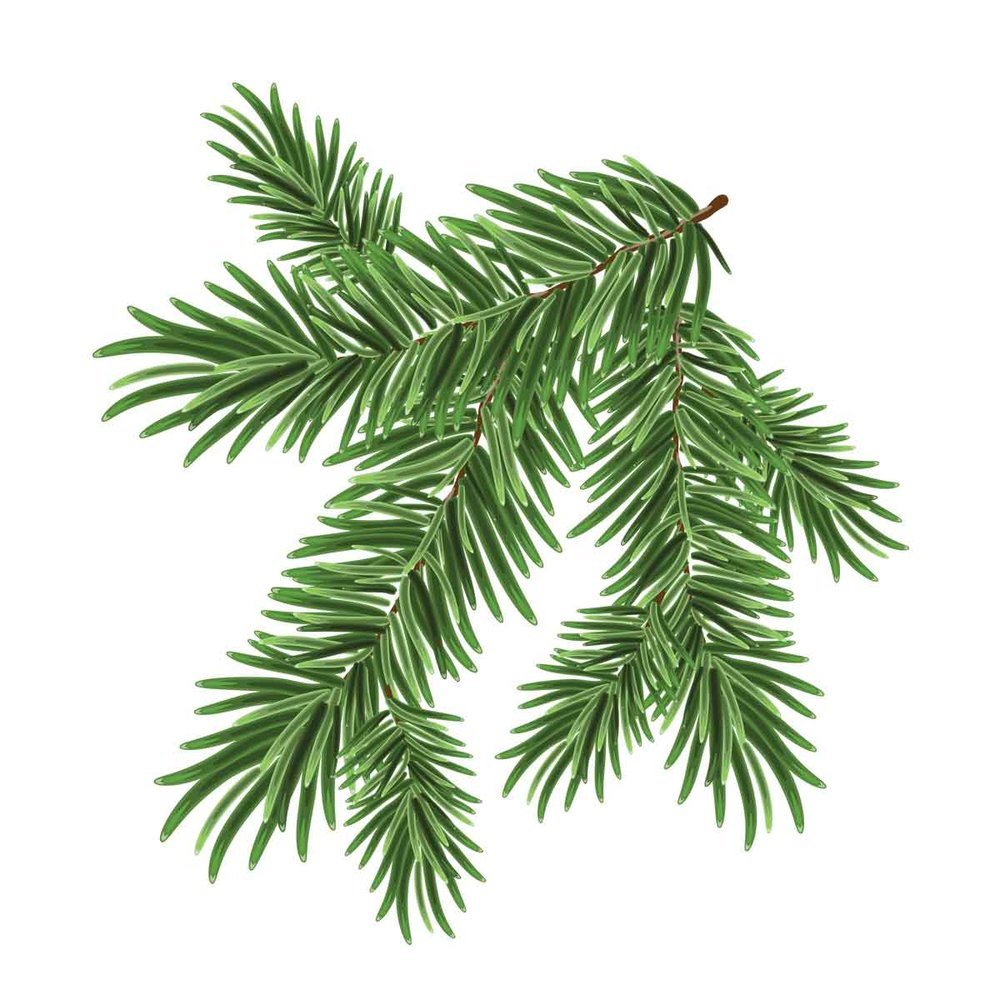Botanical-Lucid-Mood-Focus-Pine.jpg
