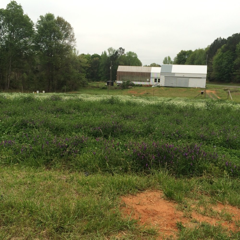 2015 barn and green house.jpg