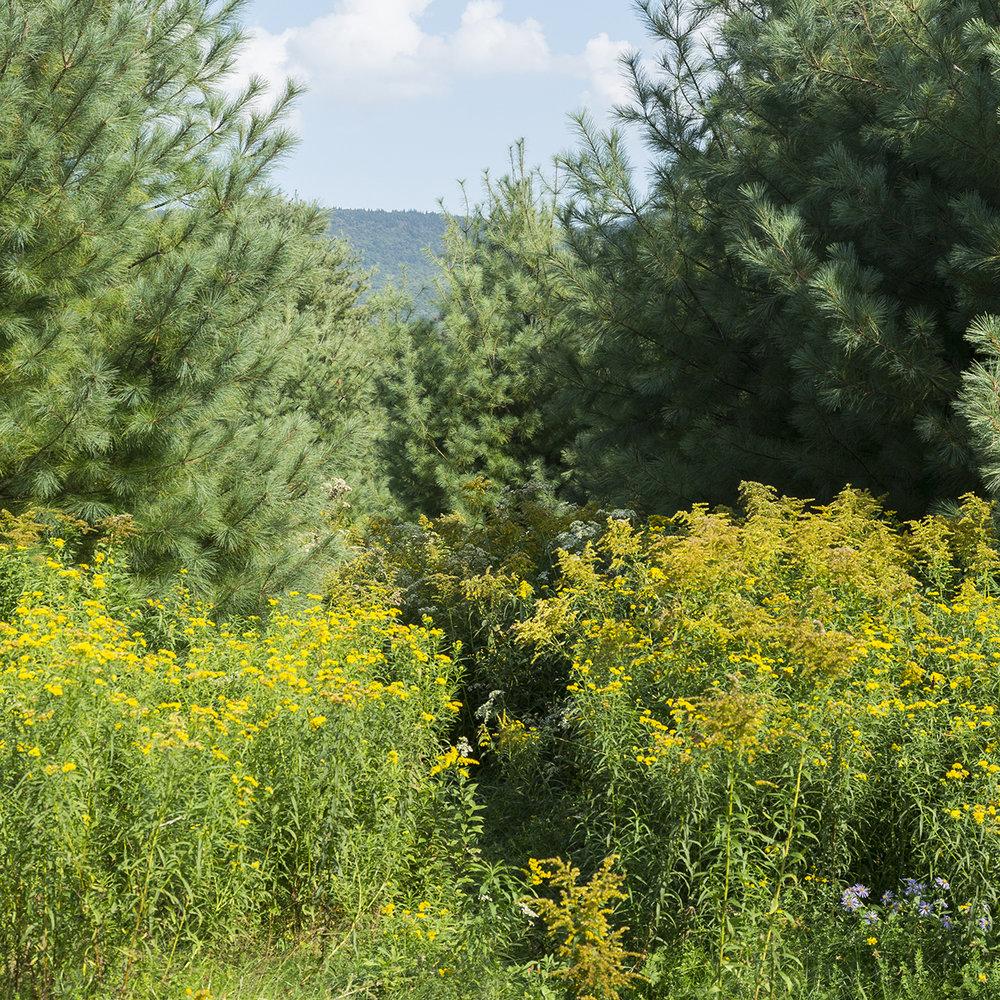 Catskills_Blackhead Range_crop.jpg