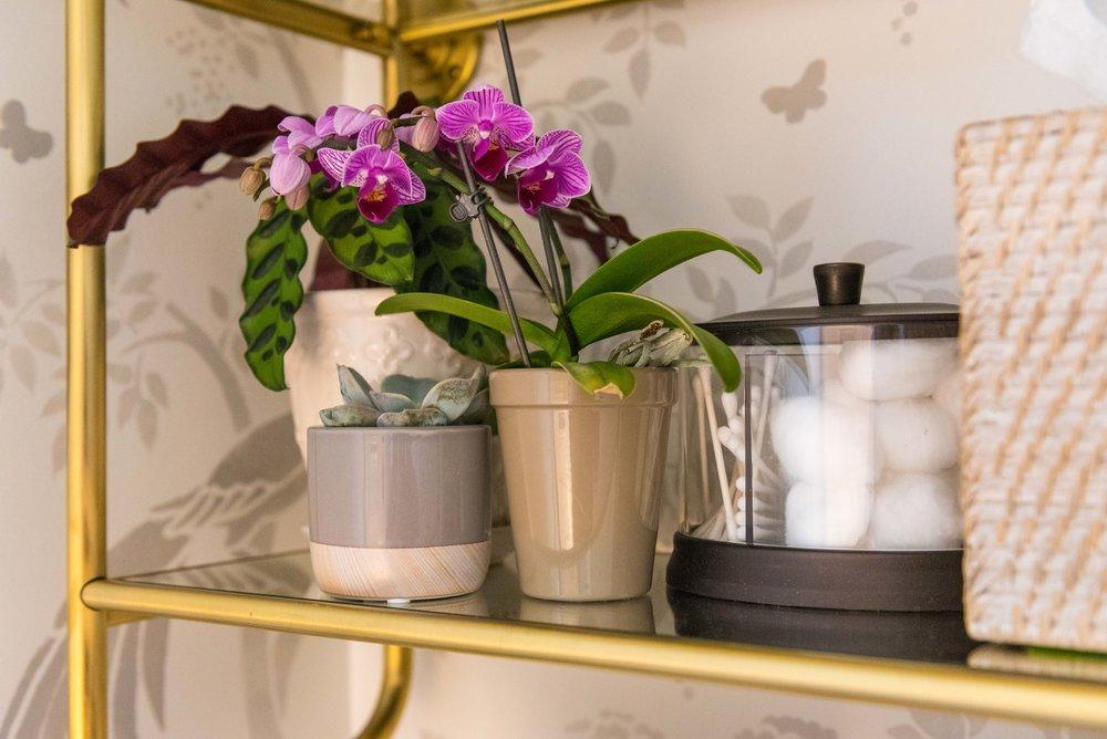 shelf-orchid-fern-succulent.jpg