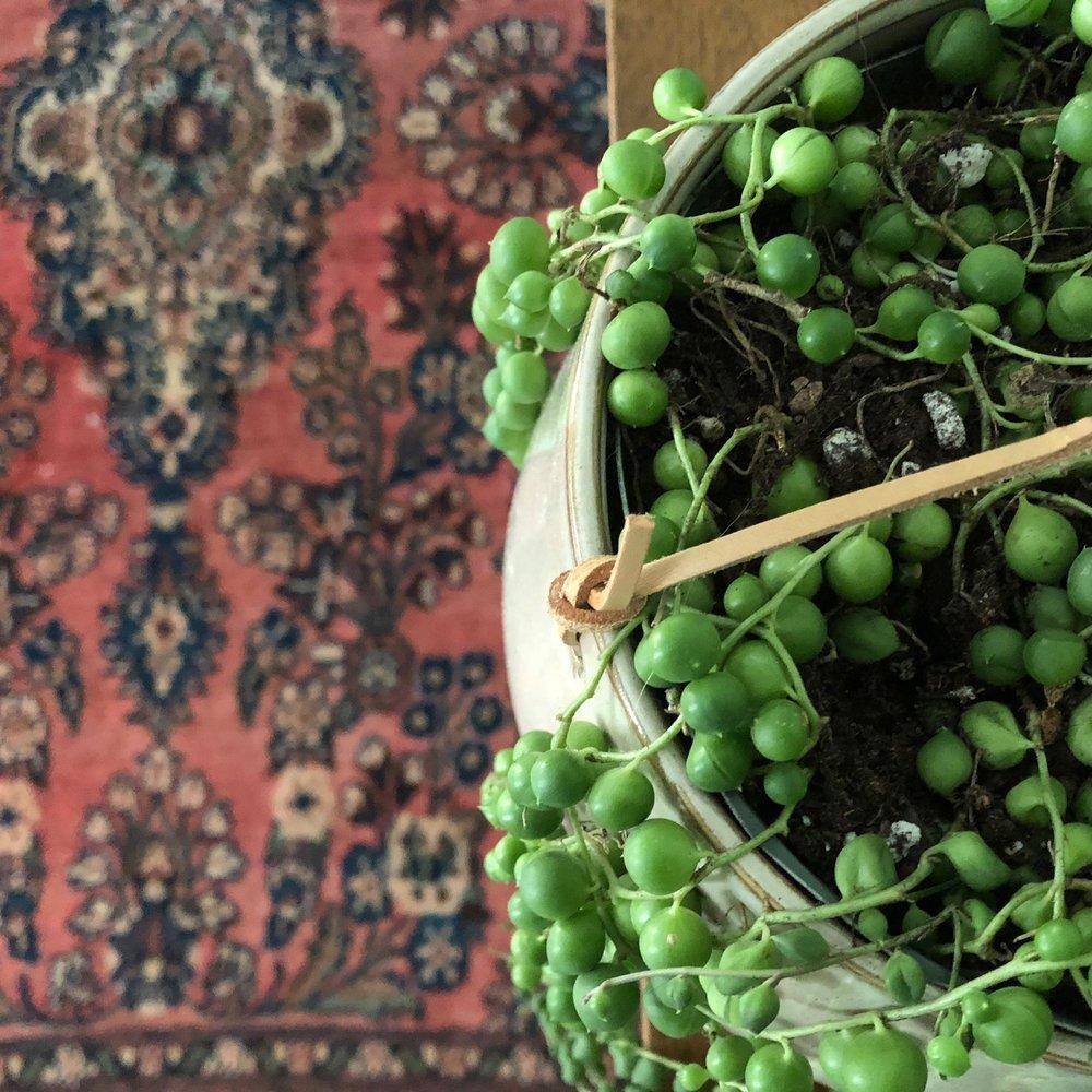 string-of-pearls.jpg