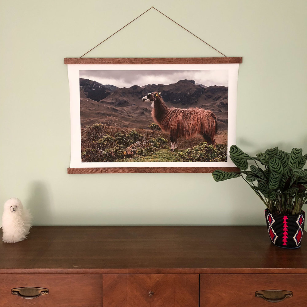 "My llama photo as a 36"" x 24"" hanging canvas from  Frame Sticks."