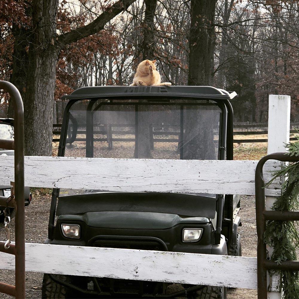 Sweet Nara thinks a mule ride would be fun!