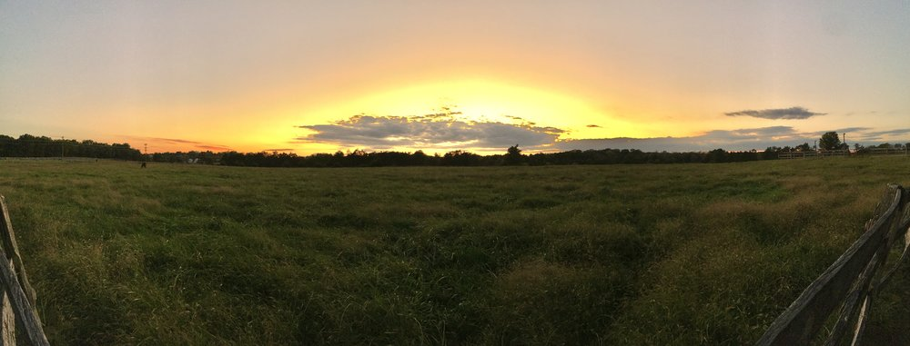 Mares' field at sunset