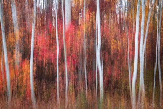 "Washington Aspen Mini-Series⁣⁣ ⁣ ⁣ ⁣⁣Image 3: BLURRED LINES⁣⁣ ⁣⁣ ⁣ ⁣ 46mm, f/11, ISO 64, 1"", polarizer ⁣ ⁣ ⁣ ⁣ ""There is nothing worse than a sharp image of a fuzzy concept""—Ansel Adams⁣⁣ ⁣⁣ ⁣ ⁣ Don't get lost in the details. The shapes, forms, tones, colors, and composition are by far more important for the overall story and concept. ⁣⁣ ⁣⁣ ⁣ ⁣ I loved the way that the Aspen's white bark danced against the soft pastel autumn colors as I walked around the grove. Shooting it sharp with all the details was pleasing, but it didn't quite capture the feeling I was going for.⁣⁣ ⁣⁣ ⁣ ⁣ To make this photo, I played with an in-field technique called Intentional Camera Movement, whereby the camera pans vertically during the (long) exposure. ⁣⁣ ⁣⁣ ⁣ ⁣ Sometimes the details are better left to the imagination. Hope you like it."