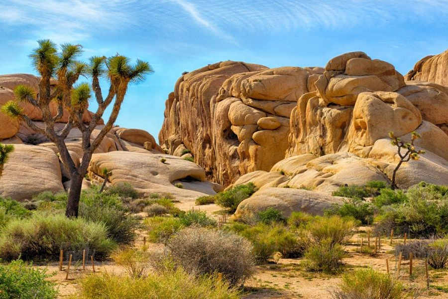 Joshua Tree National Park. Photo cred: Visit Greater Palm Springs.