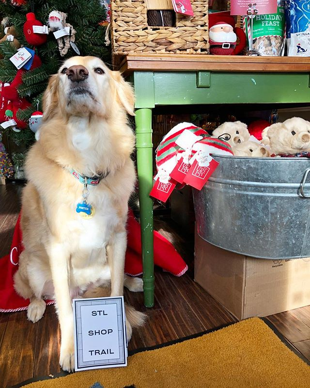 The St. Louis Shop Trail is puppy approved 🐶 Head to @fourmuddypaws for a stamp and everything your pets could ever want!
