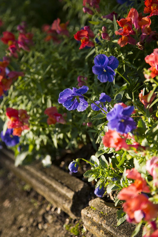 peak-bloom-at-bok-tower-gardens_28376761691_o.jpg
