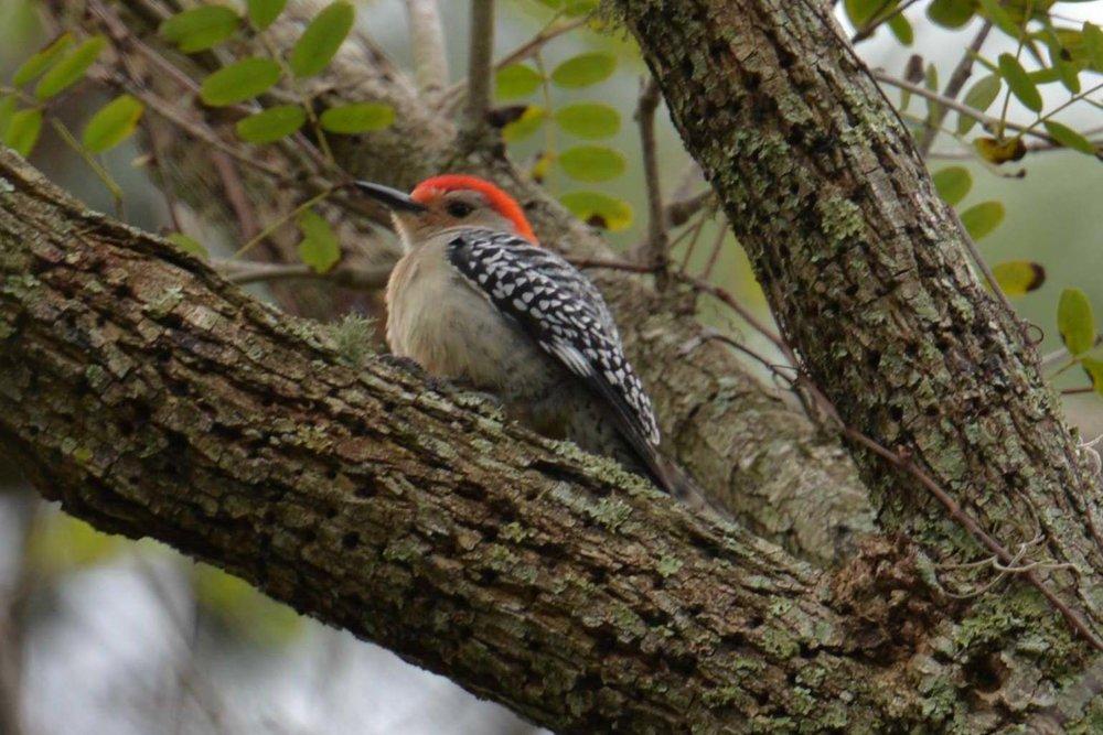 Birdwatching 00007.jpg