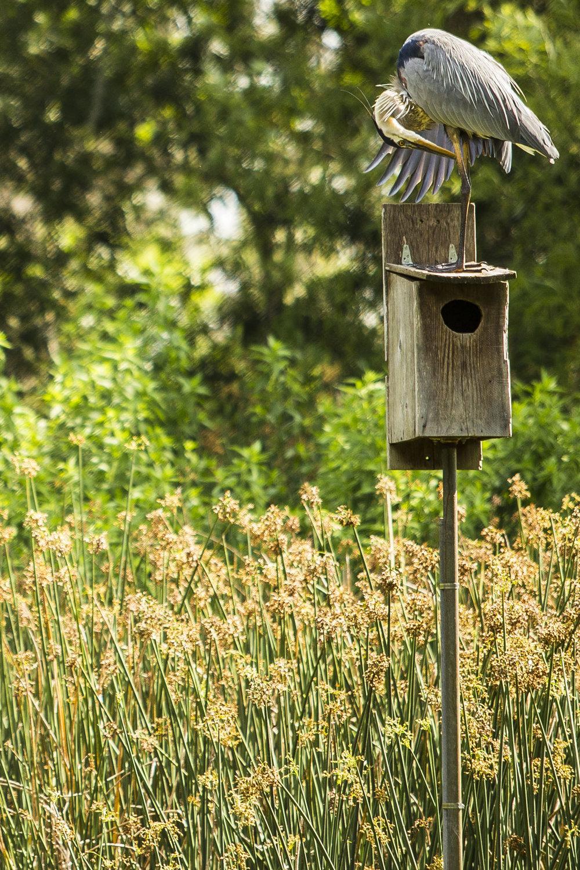 Birdwatching 00001.jpg