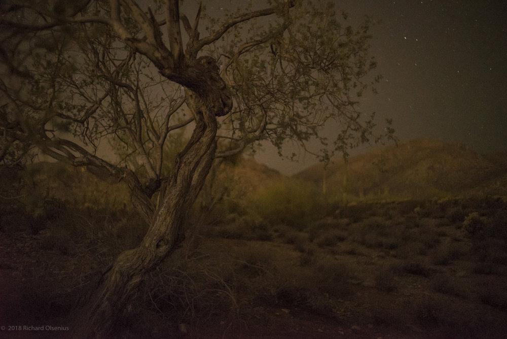 Desert_21