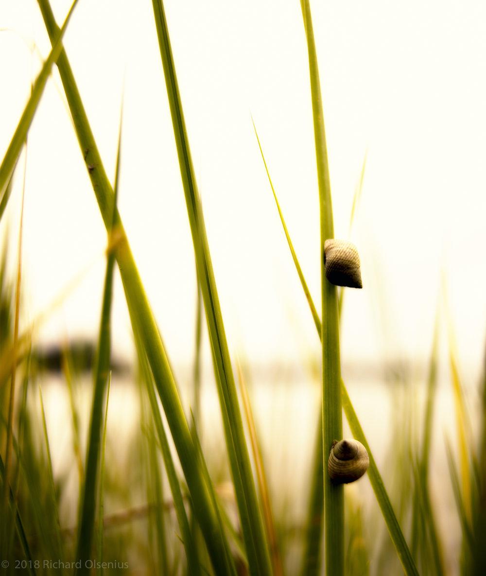 Bay Landscapes-38