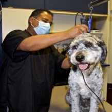 Full-Service Bath with Haircut*  Includes bath with natural shampoo, blow dry, 15-minute brush-out, ear cleaning, nail trim, gland expression & scented spritz. PLUS a cut and style to breed-specific standard or shave down. *For a custom cut or style, extra charges may apply.