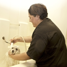 Full-Service Bath  Includes bath with natural shampoo, blow dry, 15-minute brush-out, ear cleaning, nail trim, gland expression & scented spritz.
