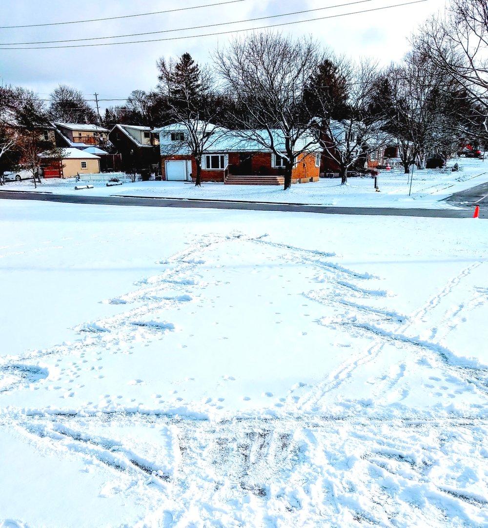 snow+tree.jpg