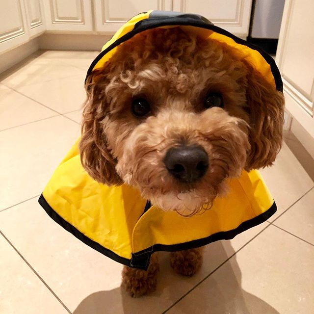 Happy spring!! April showers bring May flowers.  #dogsofinstagram #spring #health #wellness #doctors #dogs #dennycrane