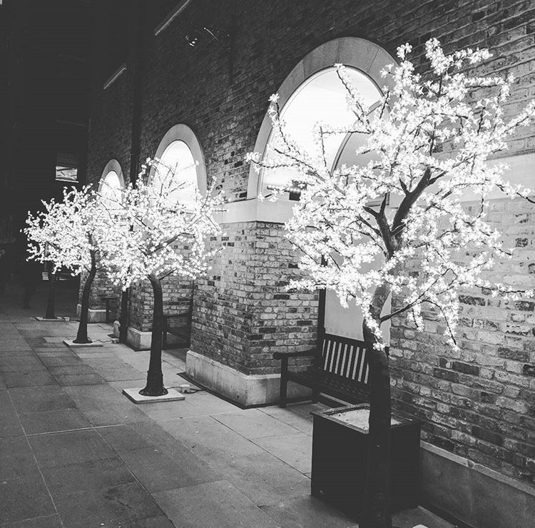 LED CHERRY TREES   Covered in pretty illuminated blossoms, our LED cherry trees have a brilliant sparkle for maximum impact. The LED cherry trees are stunning in daylight but really come to life at night..