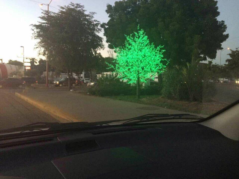 Permanent tree outside