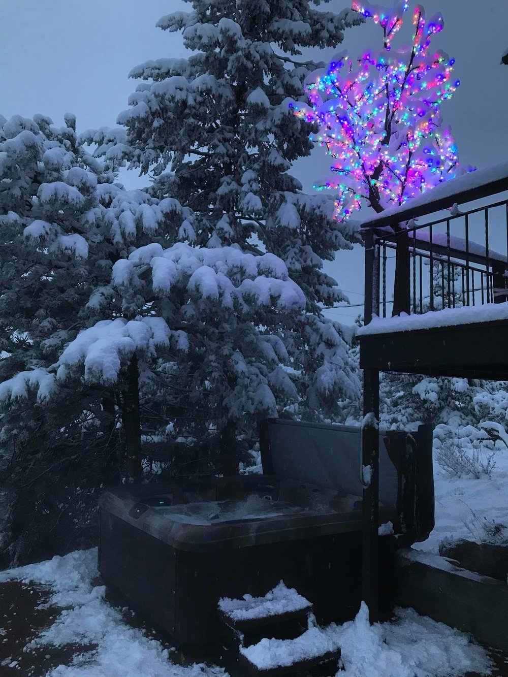 Crestone 7ft Multi Color Cherry Blossom Tree in the Rocky Mountains of Colorado