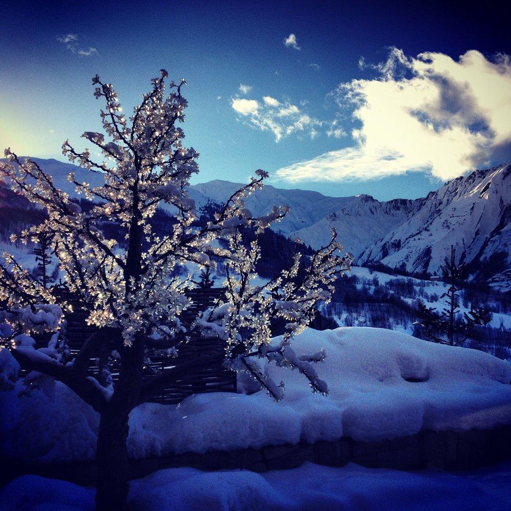 Warm white Cherry Tree in Snow