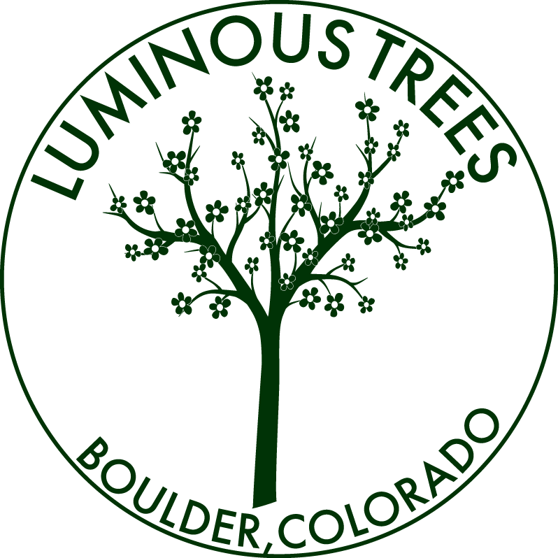 Luminous LED Trees | Hire | Buy | Boulder, Colorado