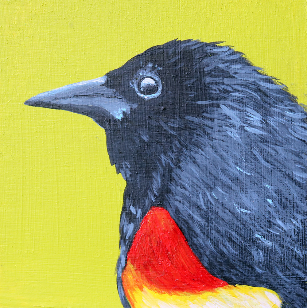redwingedblackbird4x4.jpg