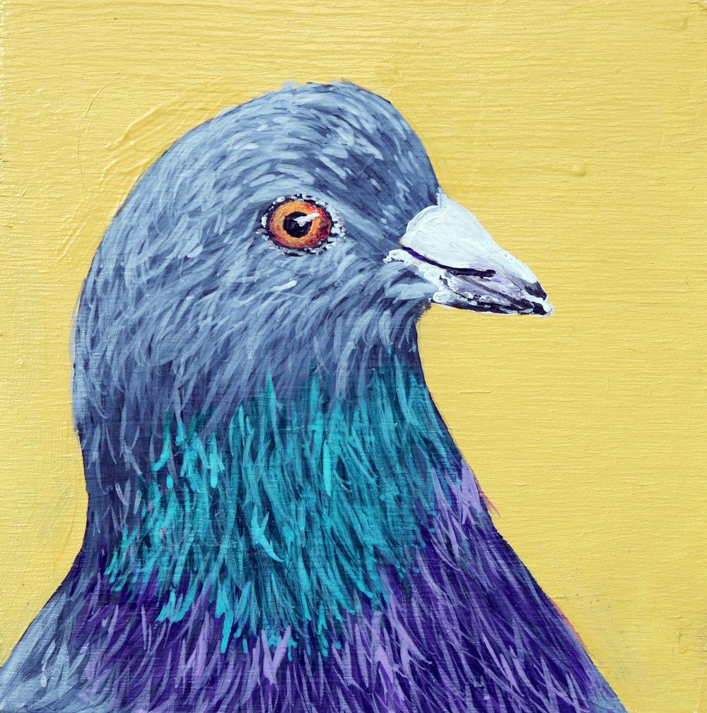 pigeon4x4.jpg
