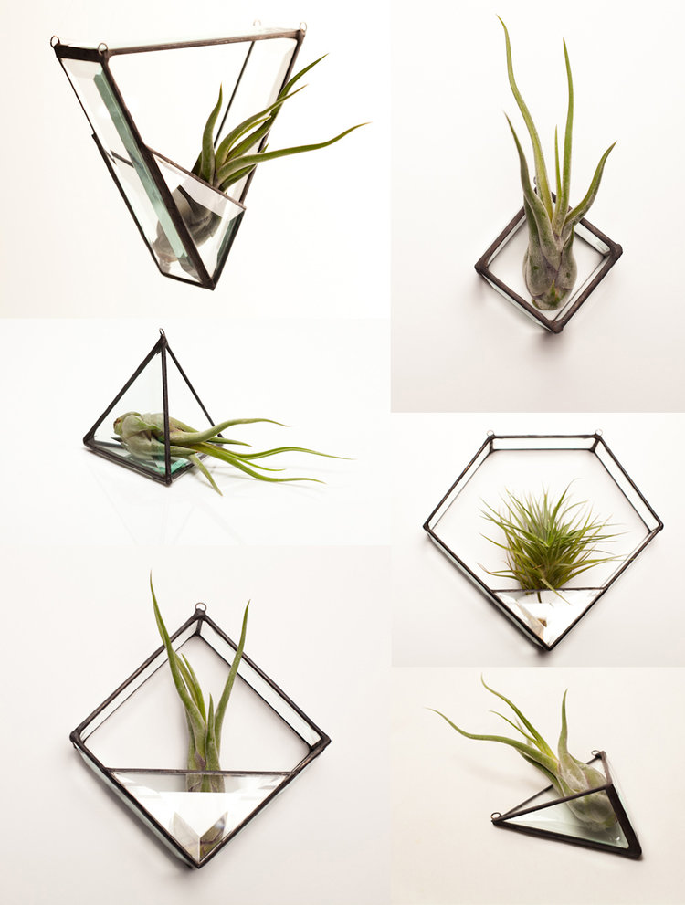 terrarium-group-1.jpg
