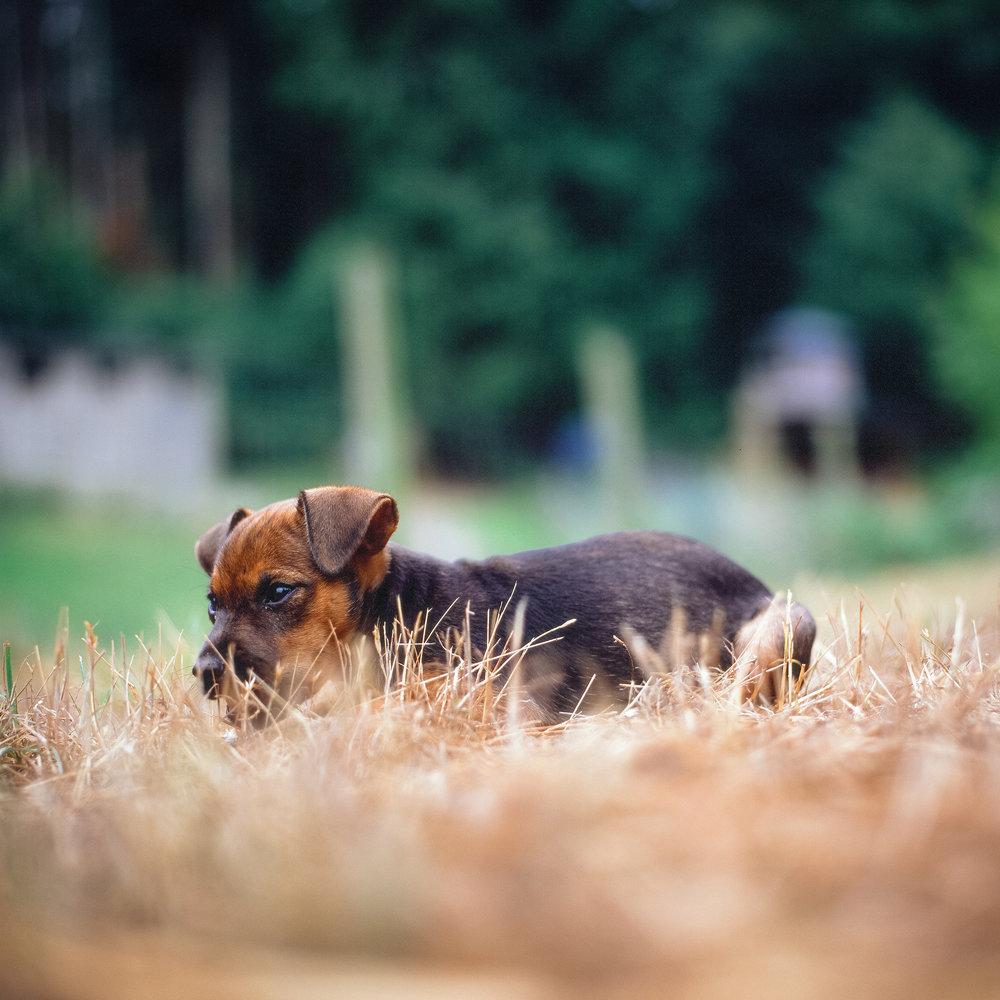 Glendale_Puppy.jpg