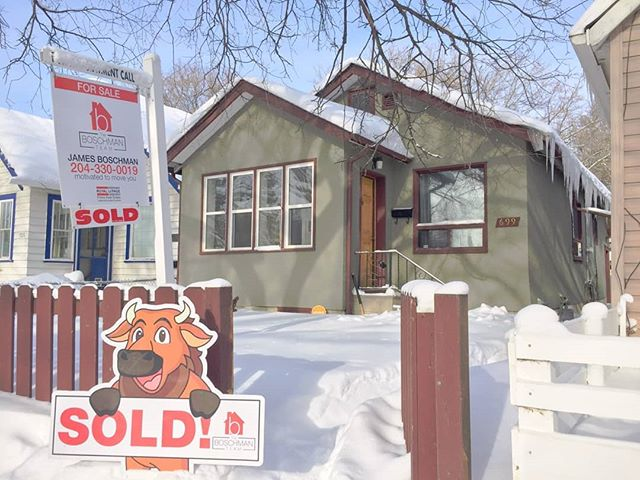 """Boschy the Bison"" was spotted at 699 Lorette Ave in Crescentwood with his big badass #SOLD sign!! Congrats to the seller client on the sale of this little cutie bungalow!  #theboschmanteam #motivatedtomoveyou #boom #sellwiththeboschmanteam #sellingwinnipeg #winnipegrealestate #winnipeg #manitoba #manitobarealestate #getshitdone #getwhatyouwant"