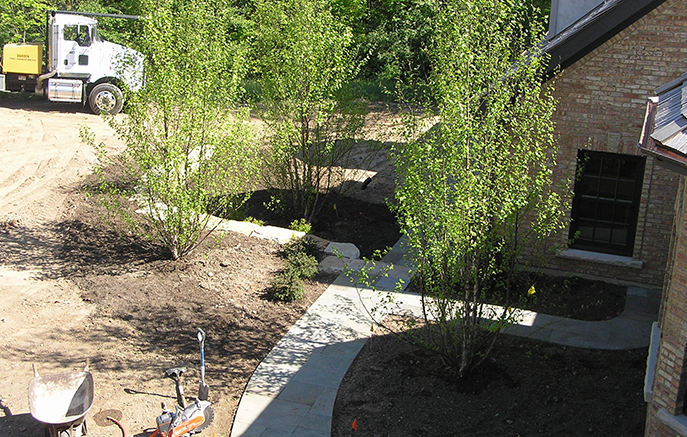 Backyard plantings begin with a group of River Birch.
