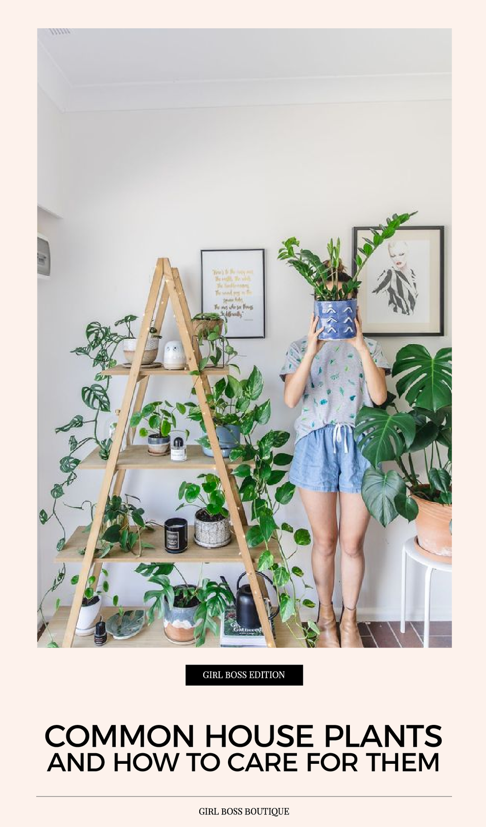 common house plants and how to care for them