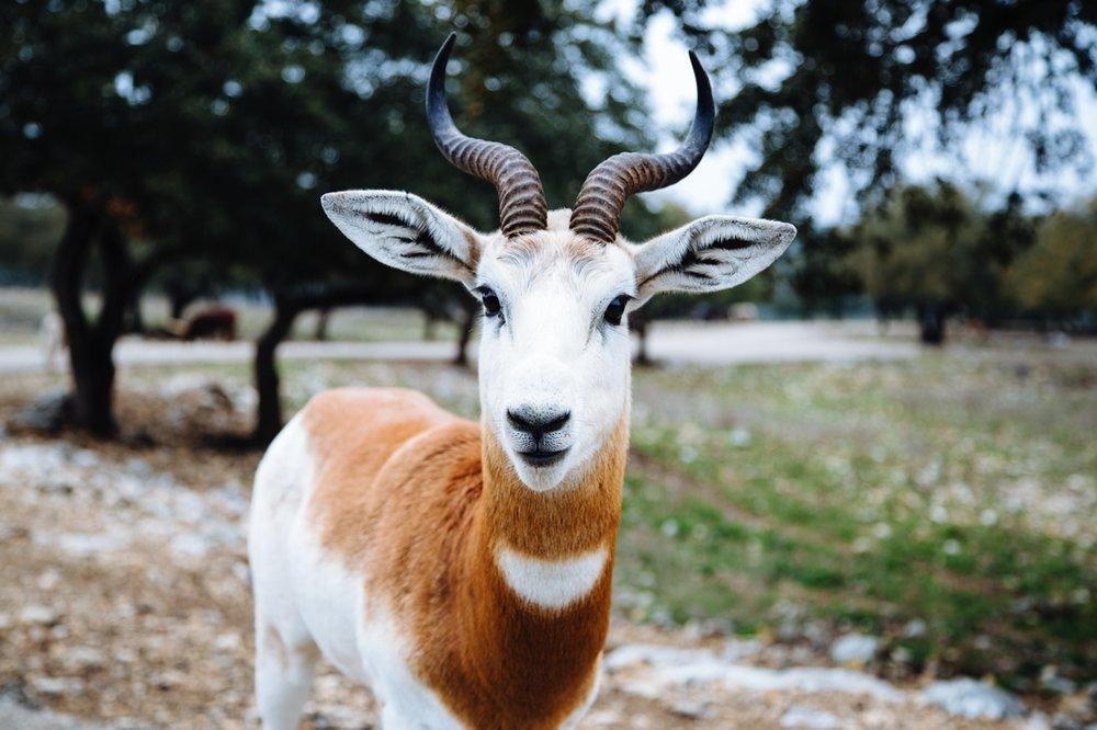 Animals - Pets/Wild