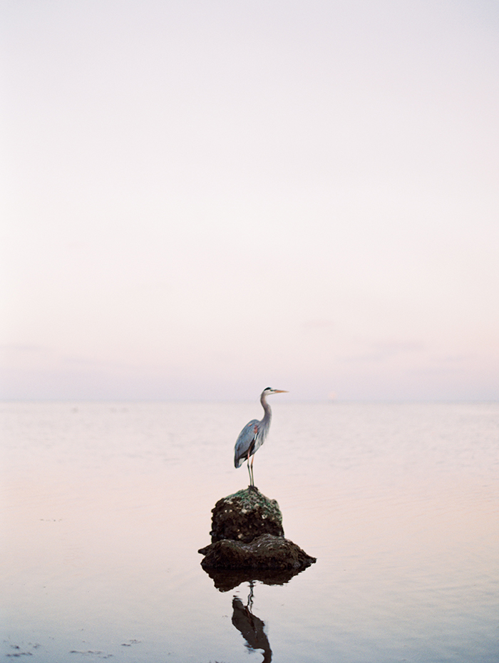 Michelle-March-Photography-Wedding-Photographer-Miami-South-Florida-Vintage-Film-Jenny-Packham-Sea-Ocean-Shells-8