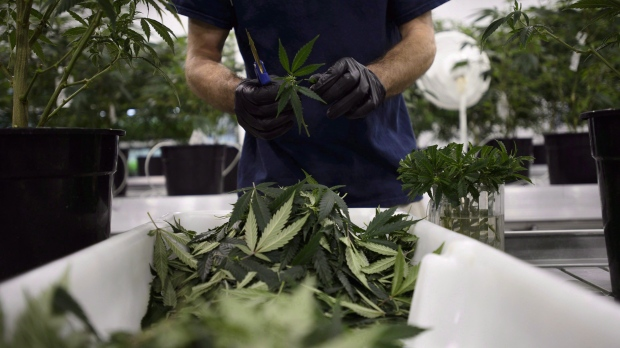 Workers produce medical marijuana at Canopy Growth Corporation's Tweed facility in Smiths Falls, Ont., on Monday, Feb. 12, 2018. (Sean Kilpatrick/The Canadian Press)