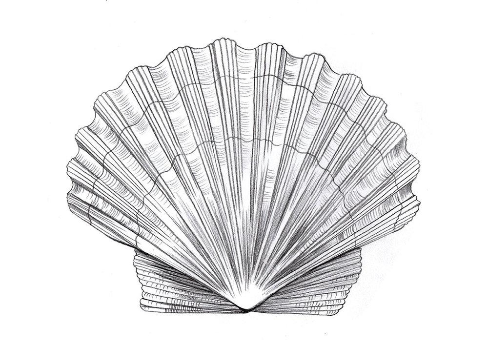 Large Shell.jpg