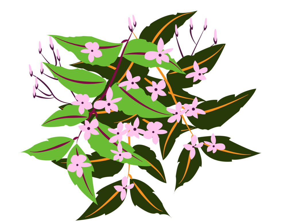 plants1-07.png