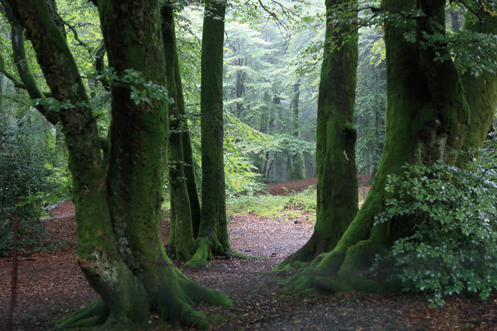 Bibrachte-woods.jpg