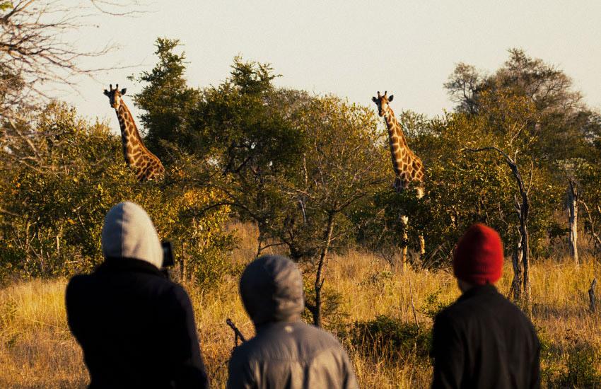 south-africa-358_094.jpg