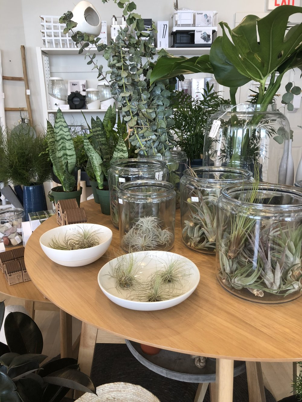 We also made a pit stop into  Oak + Moss  - a shop filled with plants, housewares and great gifts. I wanted to bring home every single plant with me!