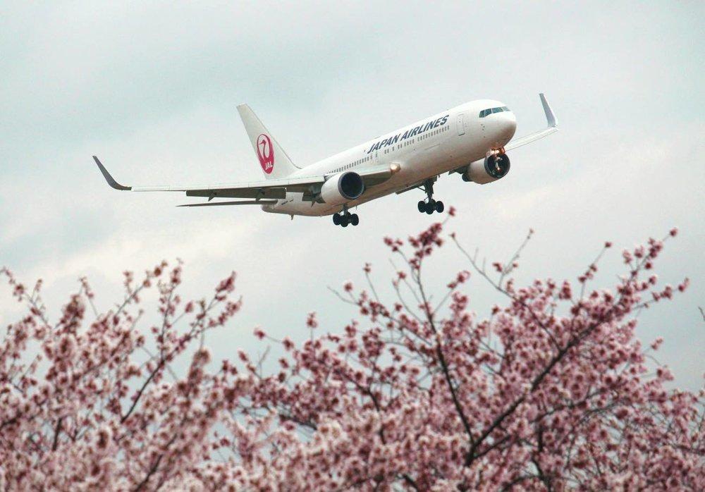 日航也遭中國施壓,一度將台灣改名「台灣(中國)」。圖片來源:Japan Airlines