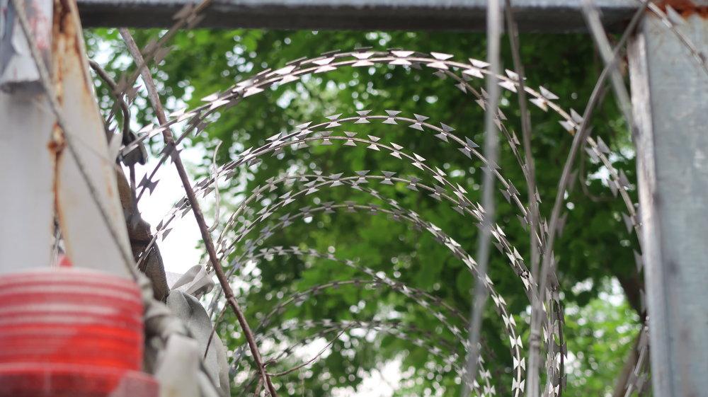 柯文哲市府用鐵皮圍籬與鐵絲網,將要移除的樹木圍住。攝:周子愉/讀報