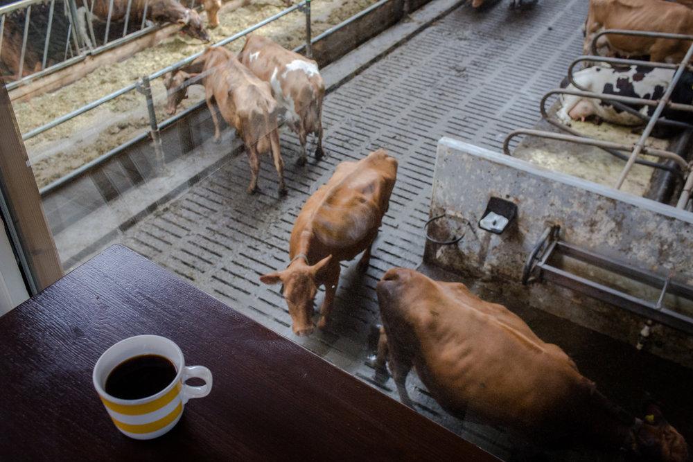 Kaffi Kú in Akureyri
